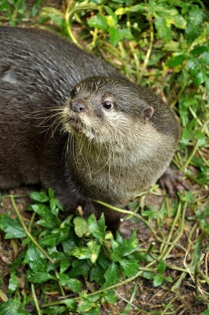Otter Photo | Premium Download