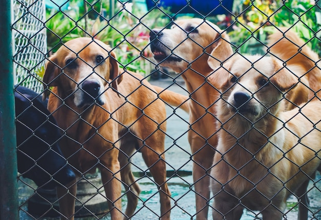 Outdoor dogs in shelter mesh. Premium Photo