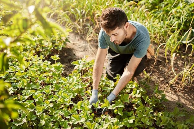 Ritratto all'aperto del giardiniere maschio caucasico di bell'aspetto maturo in maglietta blu raccolta di bacche in giardino, andando a fare marmellata di fragole per gli amici Foto Gratuite