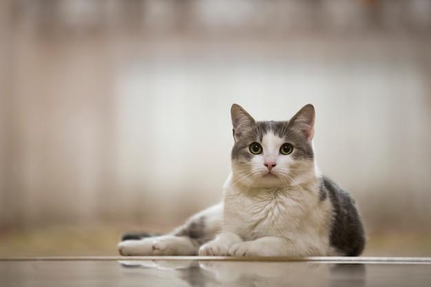Портрет славной белой и серой домашней кошки с большой круглой зеленой кладкой глаз ослабил outdoors на запачканной светлой солнечной концепции животного мира. Premium Фотографии
