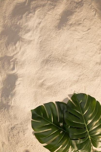 Oval monstera leaves on sandy beach Free Photo
