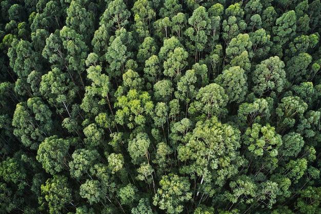 아름다운 나무와 녹지가있는 두꺼운 숲의 공중 샷 무료 사진
