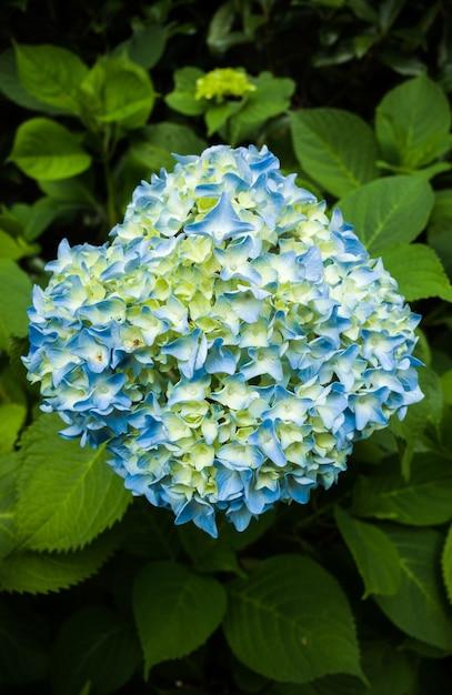 Scatto dall'alto di fiori blu, bianchi e gialli con il verde Foto Gratuite