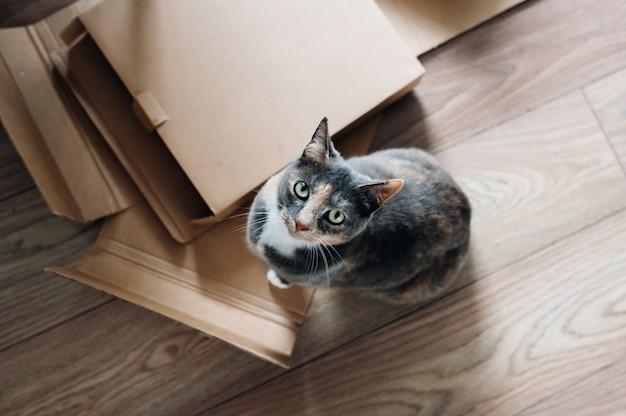 Scatto dall'alto di un simpatico gatto domestico guardando in alto e seduto accanto a assi di legno e scatole Foto Gratuite