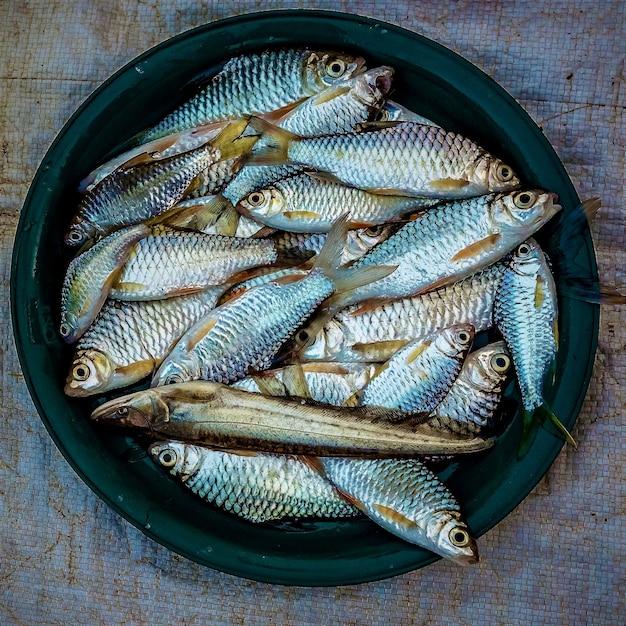 진한 녹색 접시에 배치 정어리의 오버 헤드 샷 무료 사진