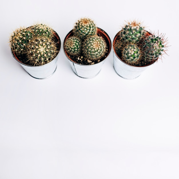An overhead view of aluminum cactus plant against white background Free Photo
