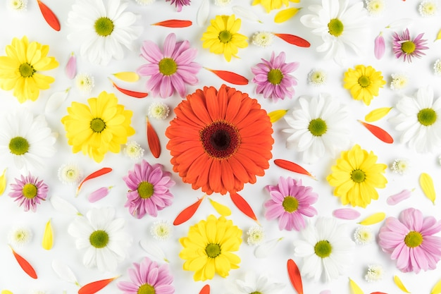 An overhead view of colorful flowerhead on white background Free Photo