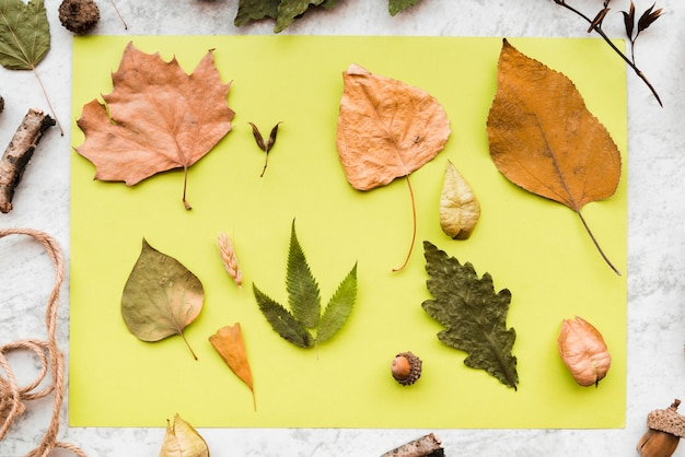 An overhead view of dried autumn leaves and acorn on green mint paper on textured backdrop Free Photo