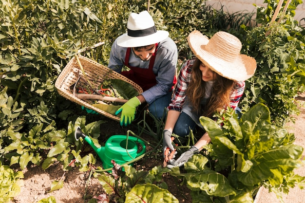 An overhead view of male and female gardener working in the vegetable garden Free Photo