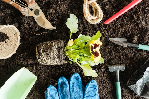 An overhead view of pansy plant surrounded with gardening tools on soil for planting Free Photo