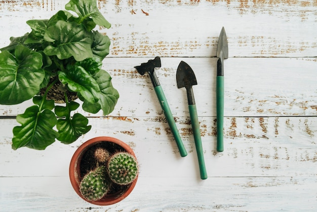 An overhead view of potted plants with gardening tools on white wooden desk Free Photo