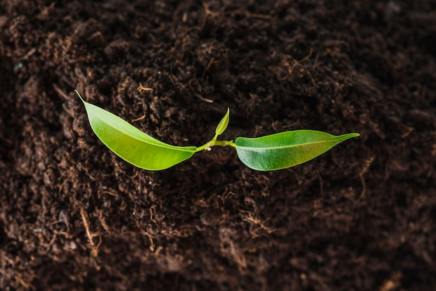 An overhead view of seedling growing in the soil Free Photo