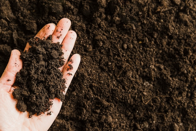 An overhead view of soil on person's hand Free Photo