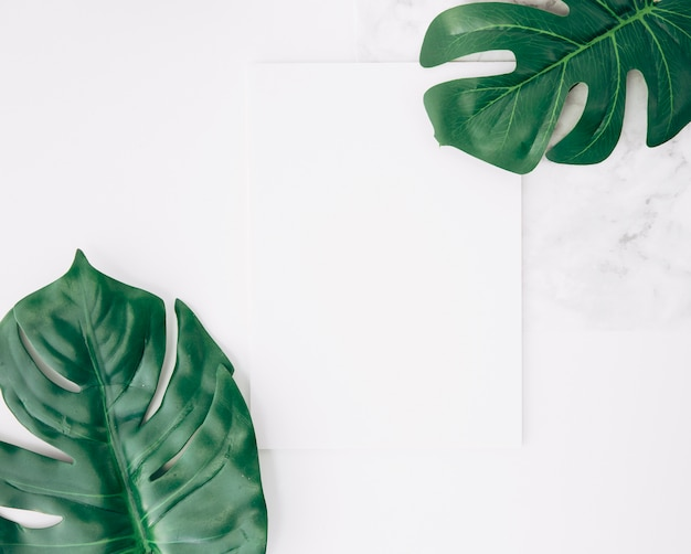 An overhead view of two monstera leaf or swiss cheese leaf with blank white paper Free Photo