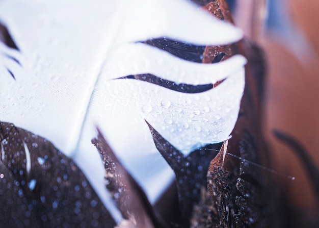 An overhead view of water droplets on the white and brown feather Free Photo