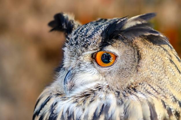 Owl eyeshadow background pattern blurred Premium Photo