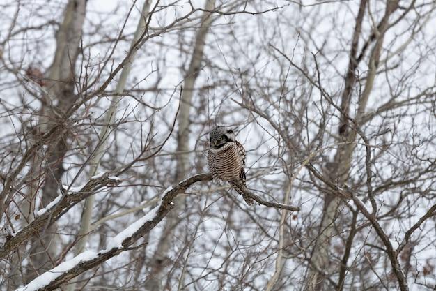 Gufo seduto su un ramo di albero coperto di neve Foto Gratuite