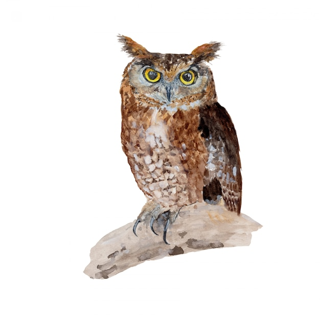 Owl watercolor painting isolated Premium Photo