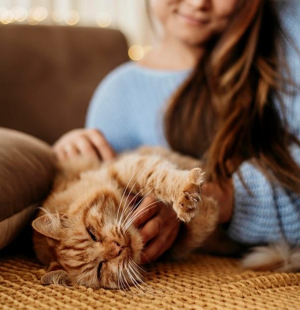 Владелец гладит очаровательную кошку Premium Фотографии