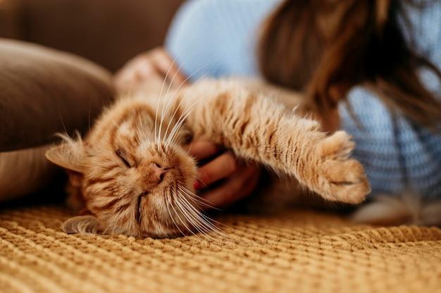 愛らしい猫をかわいがる飼い主 無料写真