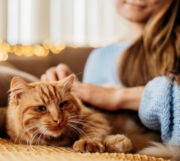 愛らしい猫をかわいがる飼い主 Premium写真