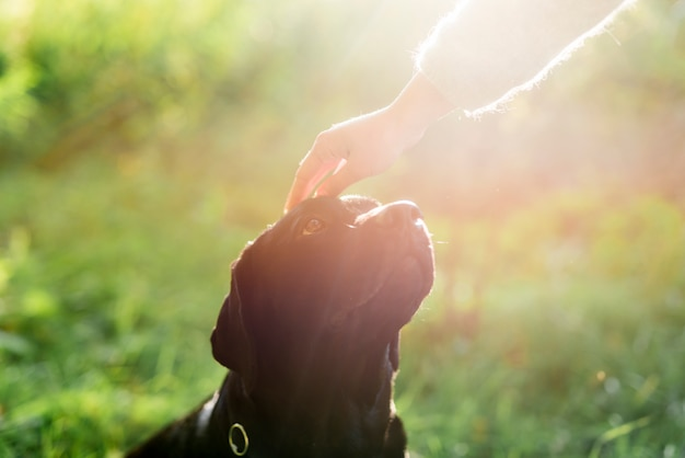 Owner's hand stroking her dog head in sunlight Free Photo