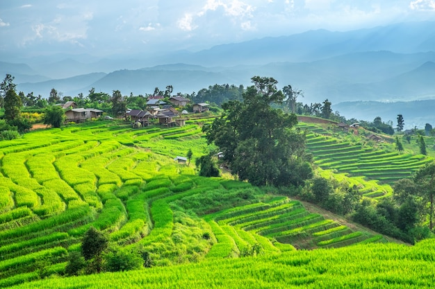 Pa bong piang rice terraces in mae chaem, chiang mai, thailand. Premium Photo