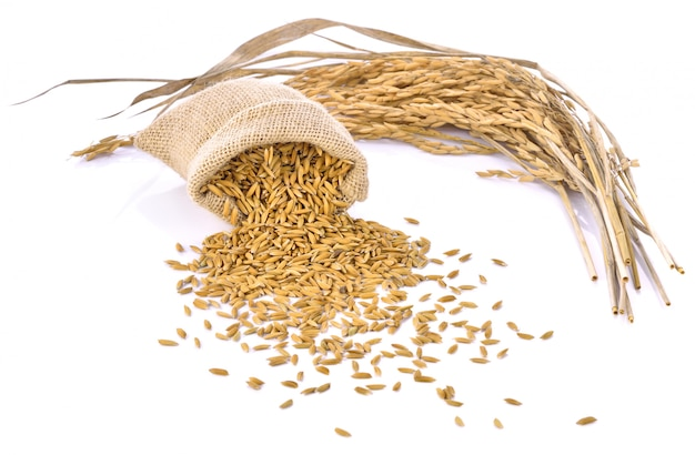 Paddy rice in small burlap sack is isolated on white background Premium Photo