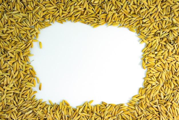 Paddy rice tree shape on white background Premium Photo