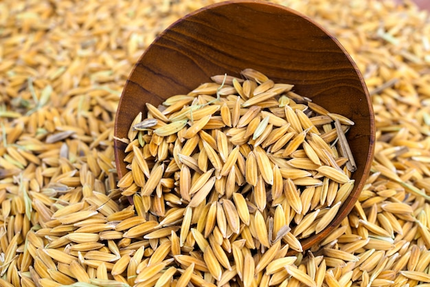 Paddy seed in wooden bowl background Premium Photo