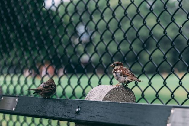 有線フェンス近くの木の上に腰掛けて2つのスズメのペア 無料写真