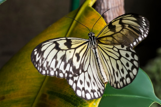 Pale butterfly on yellow leaf Free Photo
