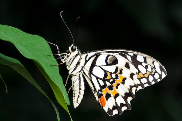 Pale colored butterfly on leaf Free Photo