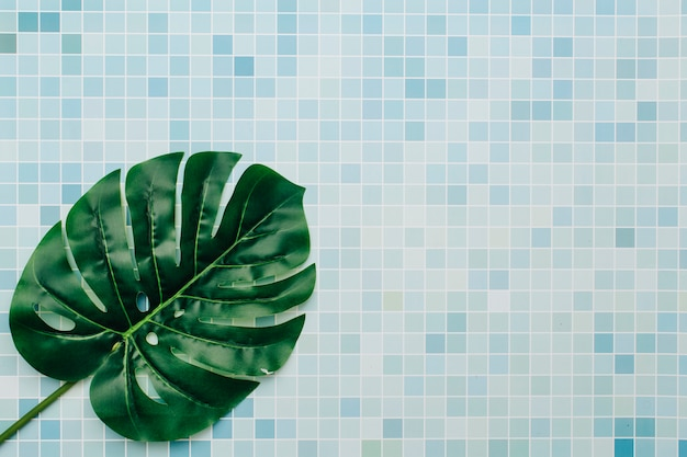 Palm leaf on a summer background Free Photo