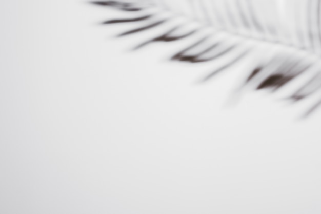 Palm leaf with shadow on white background Free Photo