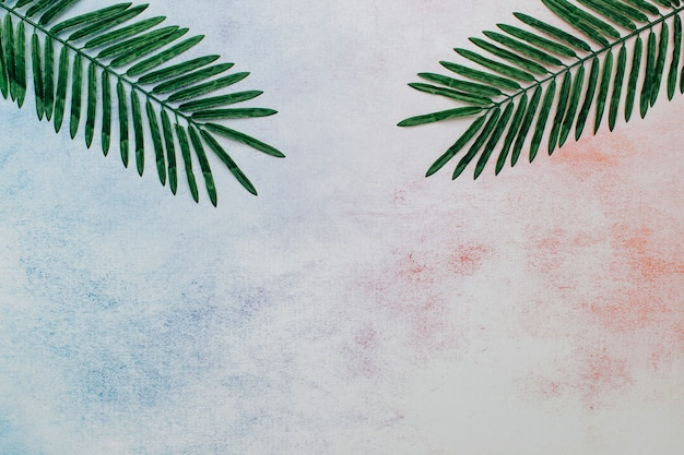 Palm leaves on an abstract background Free Photo