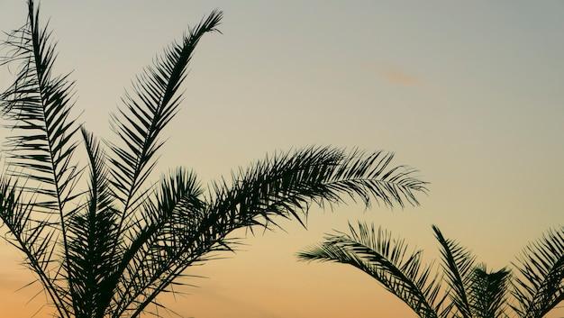 Фон из пальмовых листьев Premium Фотографии