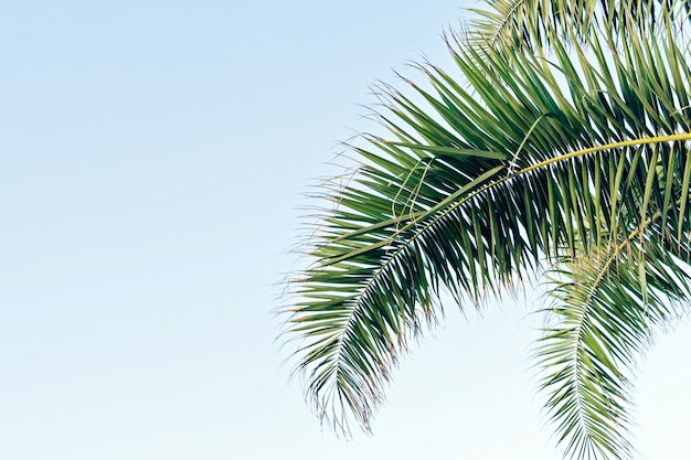 Palm leaves on blue sky with copy space Premium Photo
