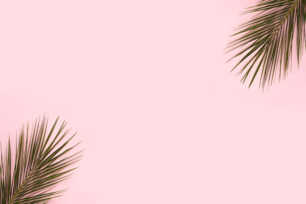 Palm leaves at the corner of pink backdrop Free Photo