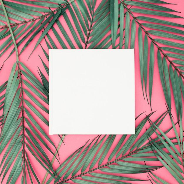 空白記号の付いたピンクの背景にシュロを葉します。 無料写真