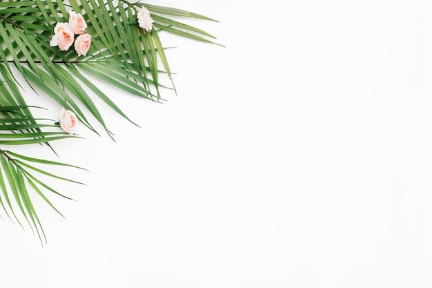 コピースペースと白い背景の上のヤシの葉 無料写真