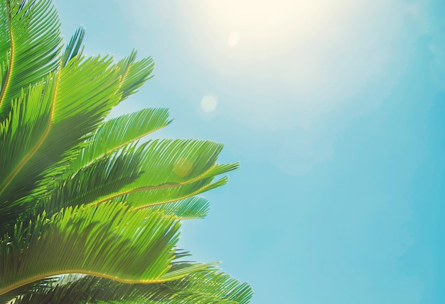 Palm leaves on sky background Premium Photo