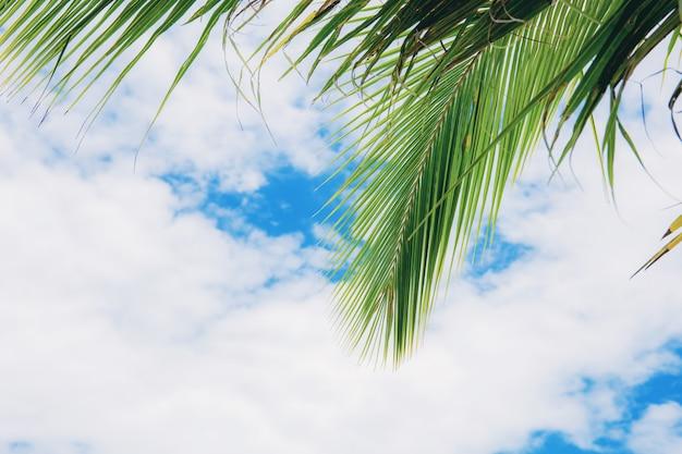 Palm leaves at sky. Premium Photo
