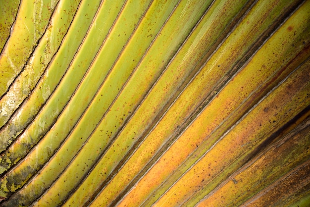 Palm line ornamental tree green and yellow color Premium Photo
