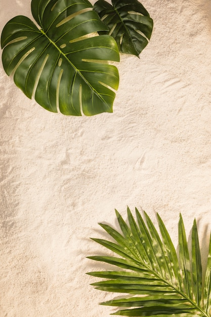 Palm and monstera leaves on yellow beach Free Photo