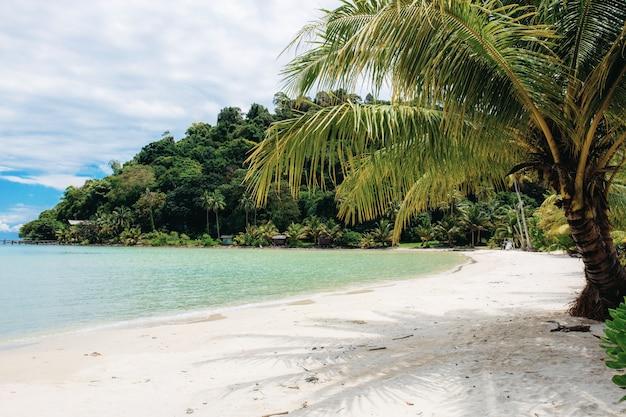 Palm tree on beach. Premium Photo