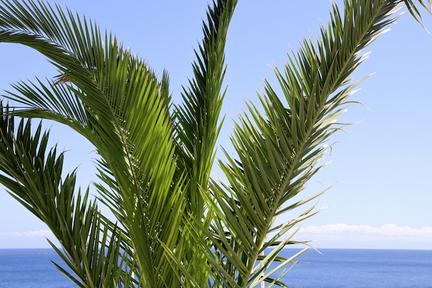 Palm tree close up with tropical sea and sky Premium Photo