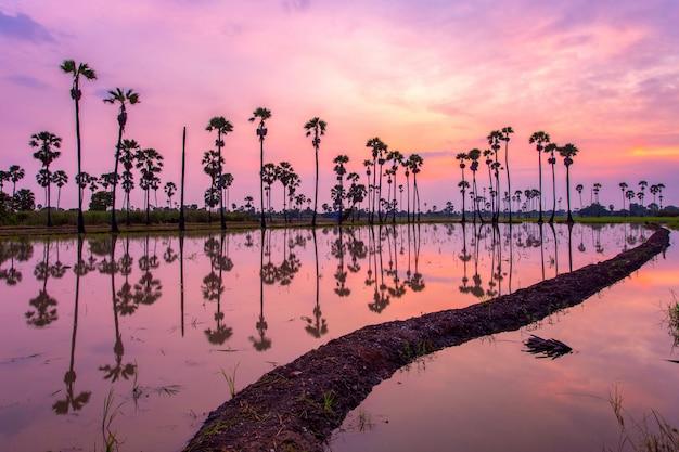 Palm tree during sunrise time Premium Photo