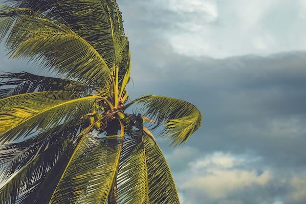 暗い雲と風のヤシの木 Premium写真