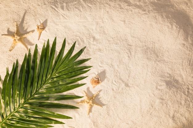 Palm tree leaf on sand Free Photo